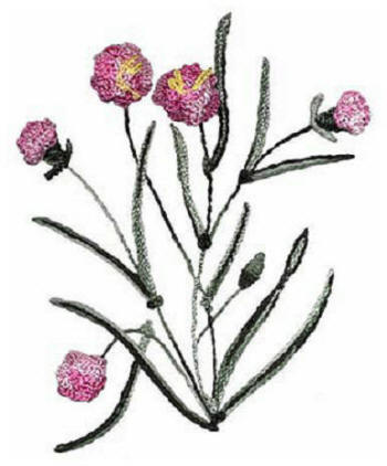 Brazilian Embroidery Pattern-Carnation